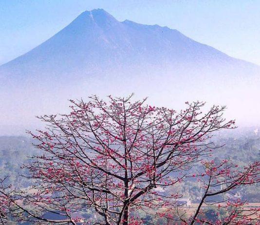 Cantiknya Merapi Bak Fujiyama